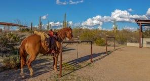 Cavallo occidentale sellato su con il fondo di sud-ovest fotografia stock libera da diritti
