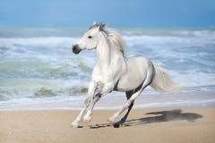 Cavallo in oceano fotografie stock