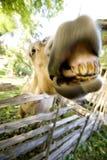 Cavallo pazzesco immagini stock libere da diritti
