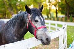 Cavallo in penna Fotografia Stock