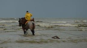 A cavallo pescatore del gamberetto Fotografie Stock