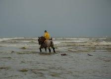 A cavallo pescatore 2 del gamberetto Fotografie Stock Libere da Diritti