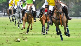 Cavallo Polo Player Playing Immagini Stock