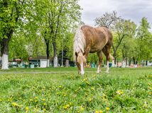 Cavallo in prato Fotografie Stock