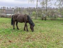 Cavallo in prato Fotografia Stock