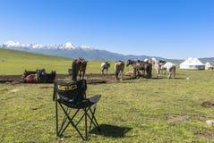 Cavallo in prato dello Xinjiang, Cina fotografie stock libere da diritti