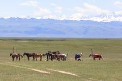 Cavallo in prato dello Xinjiang, Cina fotografia stock