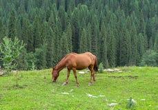 Cavallo in prato dello Xinjiang, Cina fotografie stock