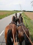 Cavallo quattro a disposizione Immagini Stock Libere da Diritti