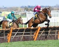 Cavallo Racing Immagini Stock