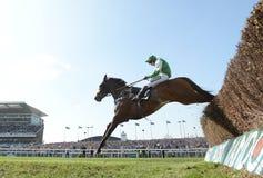 Cavallo Racing Immagini Stock Libere da Diritti