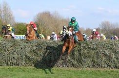 Cavallo Racing Immagine Stock