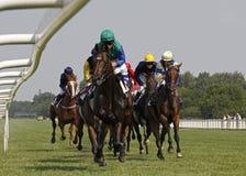 Cavallo racing_3 Fotografie Stock Libere da Diritti