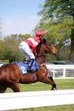 Cavallo Racing Fotografie Stock