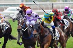 Cavallo Racing Immagine Stock Libera da Diritti