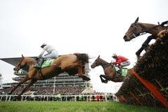 Cavallo Racing Fotografia Stock Libera da Diritti