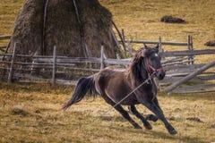 Cavallo, Romania immagine stock libera da diritti