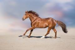 Cavallo rosso in deserto fotografie stock libere da diritti