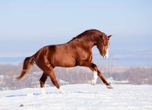 Cavallo rosso sulla neve in inverno fotografia stock