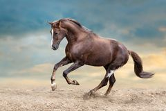 Cavallo in sabbia fotografia stock libera da diritti