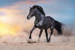 Cavallo in sabbia al tramonto fotografia stock libera da diritti