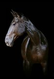 Cavallo scuro Fotografie Stock