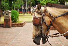 Cavallo sellato e con i ciechi Immagine Stock