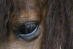 Cavallo selvaggio Fotografie Stock