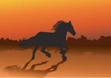 Cavallo selvaggio Immagine Stock Libera da Diritti