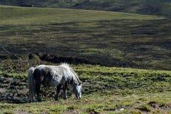 Cavallo selvaggio fotografia stock