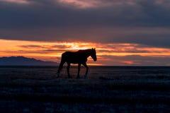 Cavallo selvaggio al tramonto immagine stock
