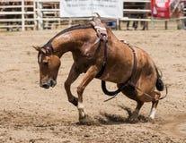 Cavallo selvaggio Bucking Immagini Stock