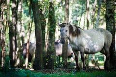 Cavallo selvaggio in foresta Immagine Stock
