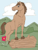 Cavallo selvaggio nel campo Fotografia Stock Libera da Diritti