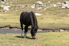Cavallo selvaggio sul pascolo della montagna Immagini Stock