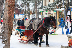 Cavallo sfruttato alla slitta Fotografie Stock Libere da Diritti