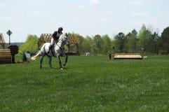 Cavallo Sh0w 2 del paese trasversale Fotografia Stock