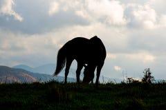 Cavallo Shiloutte Fotografie Stock