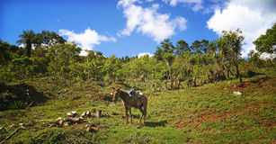 Cavallo solo della montagna Fotografia Stock Libera da Diritti