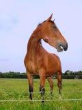 Cavallo sorridente immagine stock