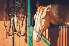 Cavallo in stalla contemporanea Fotografia Stock Libera da Diritti