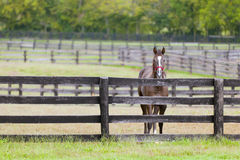 Cavallo su un'azienda agricola Immagini Stock Libere da Diritti