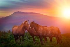 Cavallo su un campo nelle montagne immagini stock