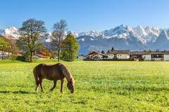 Cavallo su un fondo delle montagne nella valle, vicino a Garmisch Immagini Stock