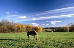 Cavallo su un pascolo Fotografia Stock