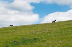 Cavallo su un pascolo Fotografia Stock Libera da Diritti