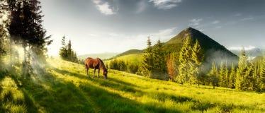 Cavallo su un pascolo di estate nelle montagne Immagini Stock Libere da Diritti