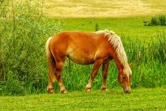Cavallo su un prato fotografia stock