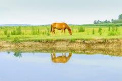 Cavallo su un prato vicino a watter fotografia stock libera da diritti