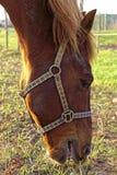 Cavallo su un recinto chiuso Fotografia Stock Libera da Diritti